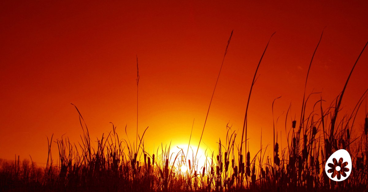 Ontwikkel je spirituele leven 5 stappen sochicken - Ontwikkel een grote woonkamer ...