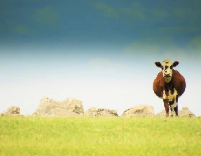 Minder vlees eten voor een gezonder lichaam en een gezondere wereld