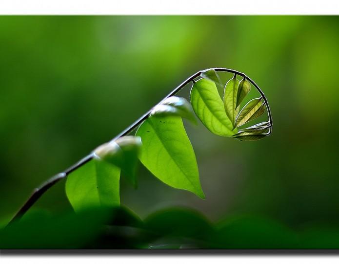 Groener leven in 7 stappen