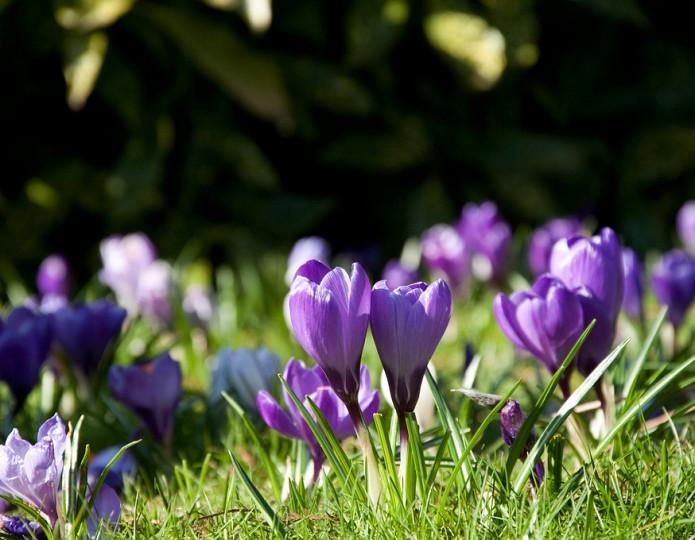 11 manieren om te genieten van de lente!