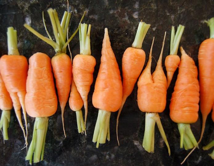 Terug in de kringloop: kiezen voor echt eten