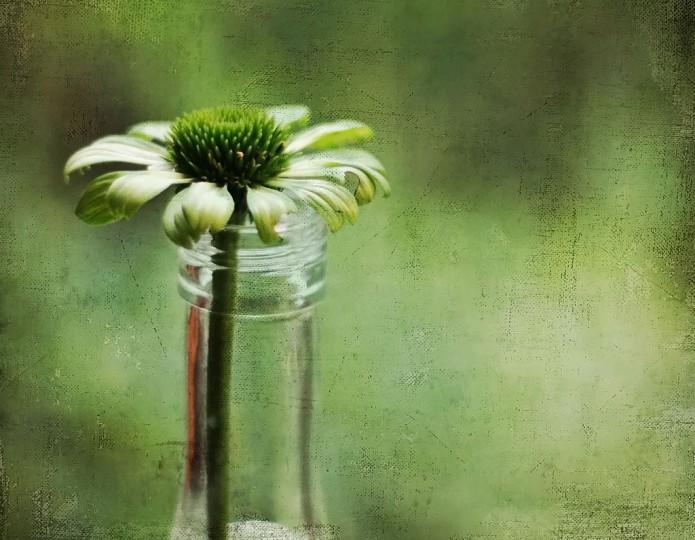 Groen leven: zet je schuldgevoel om in actie!