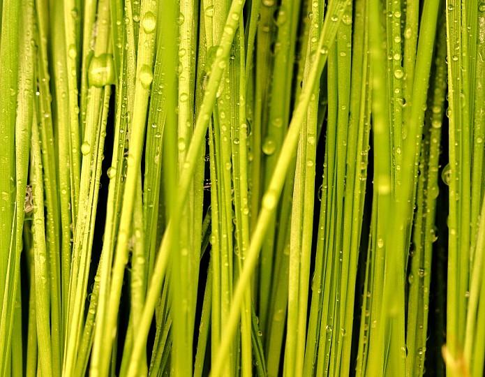 Het gras is alleen groener in jezelf