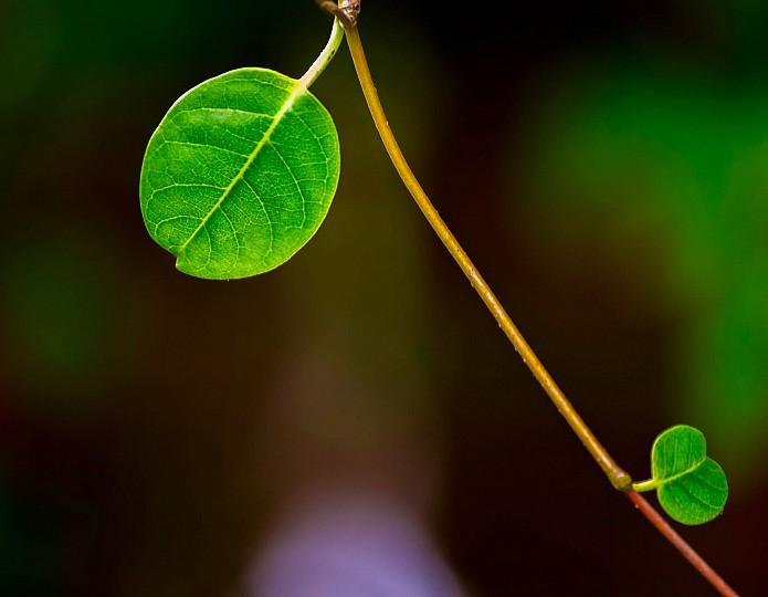 6 herkenningspunten van hooggevoelige personen (hsp)