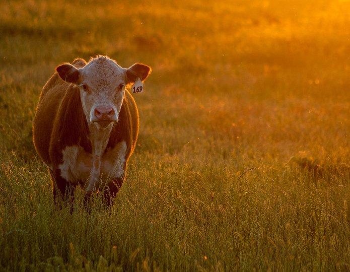 7 simpele manieren om minder vlees te eten