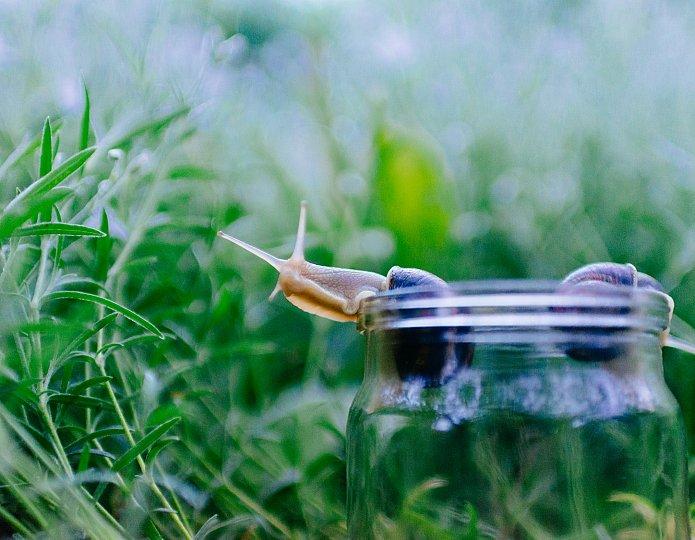 Langzaam leven - vertragen naar het natuurlijke ritme