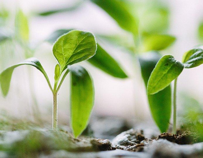 Positief omgaan met klimaatverandering - 5 tips