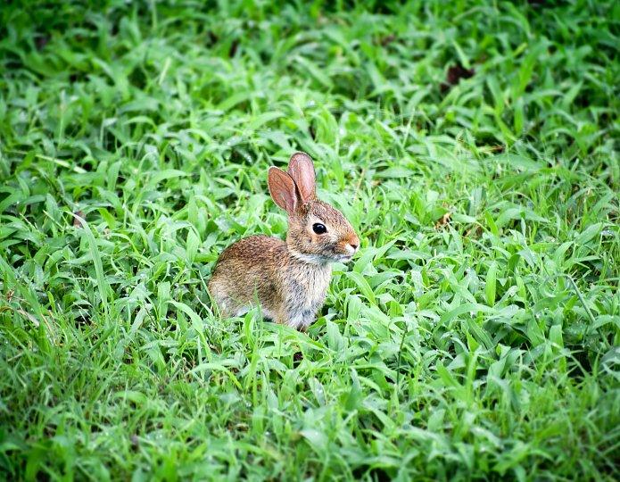 Leren waarderen wat je hebt - waarom het gras bij jou het groenst is
