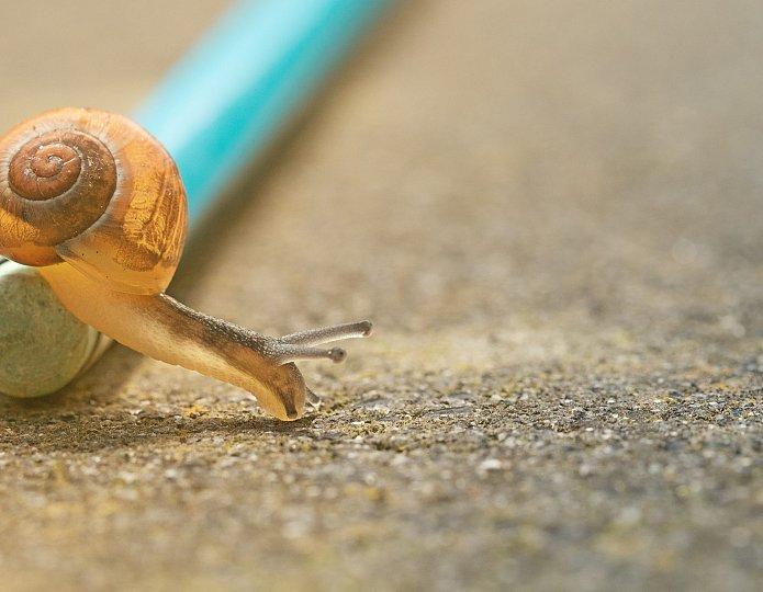 Waarom langzaam vaak het snelst gaat