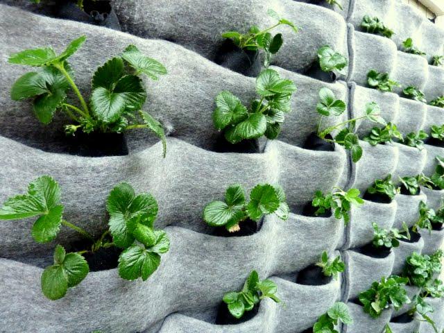 Voedsel verbouwen in kleine ruimtes 5 tips sochicken for Plantaciones verticales