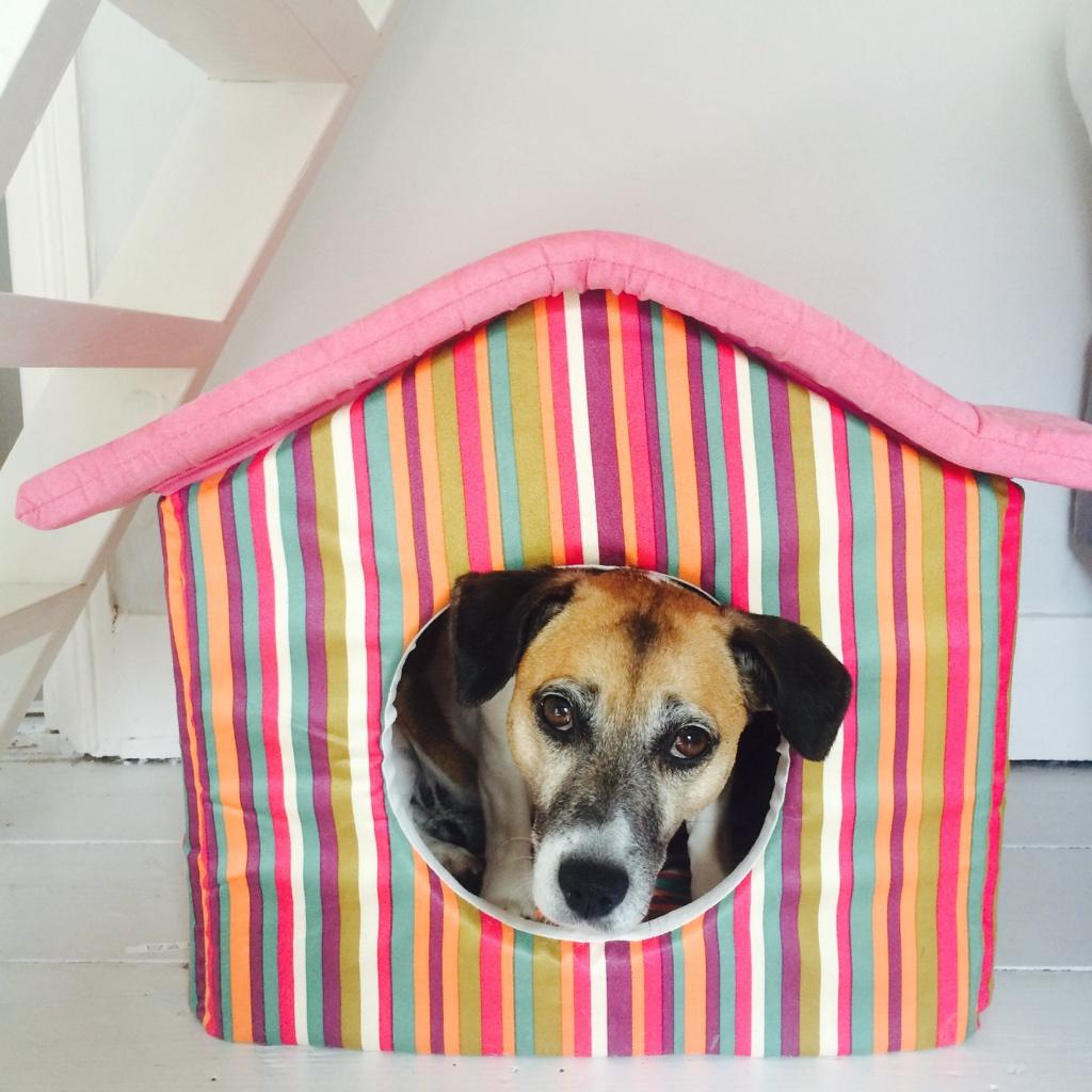 Snuffel in haar hondenhol